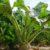 Uprawa roślin okopowych