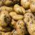Zbiór i przechowywanie ziemniaków