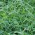 Mieszanki traw z koniczynami