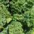 Uprawa roślin pastewnych