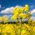 Uprawa roślin przemysłowych