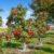 Zasilanie drzew owocowych nawozami
