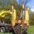 Ratowanie drzew posadzonych zbyt głęboko